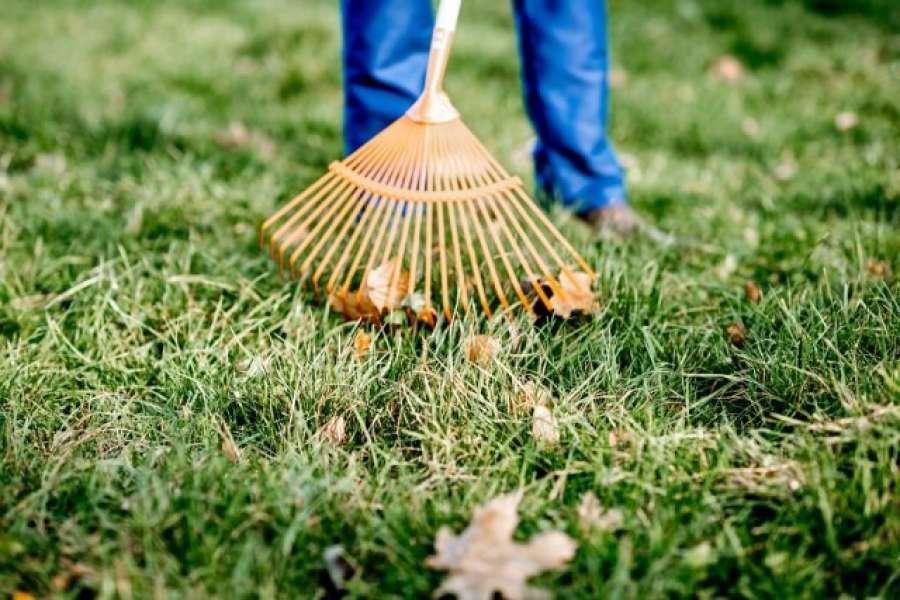 Manutenzione giardini per aziende Roma